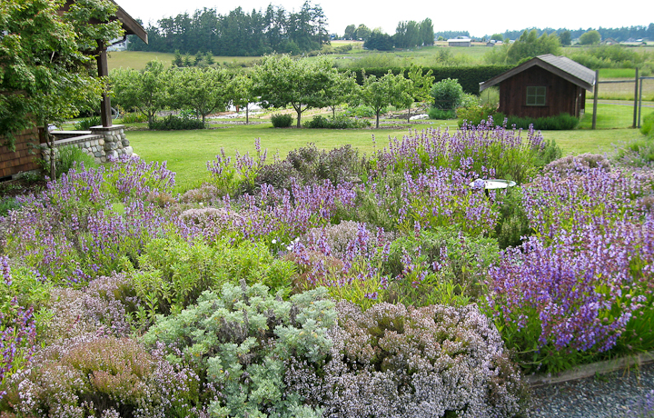 herb garden  lopez island kitchen gardens, Beautiful flower
