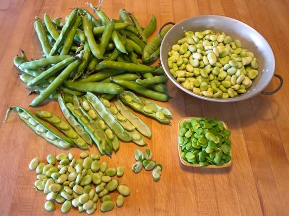 Fava beans prepared
