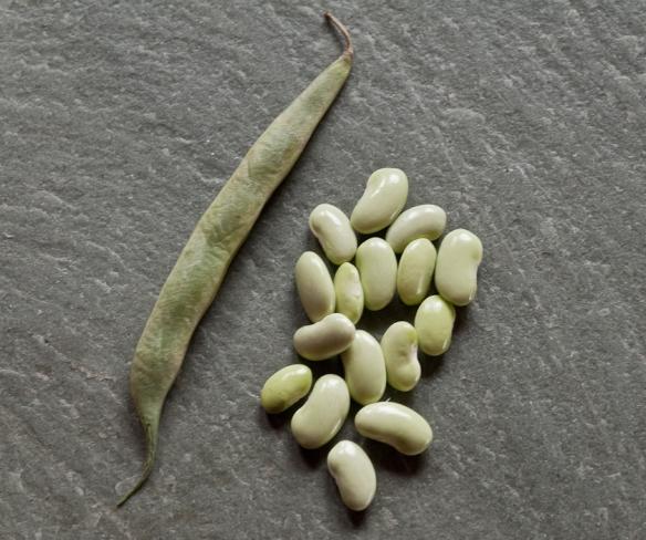 Bean Soissons Vert