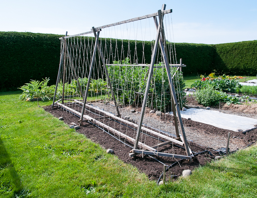 Help me with my trellis for Garden structure design