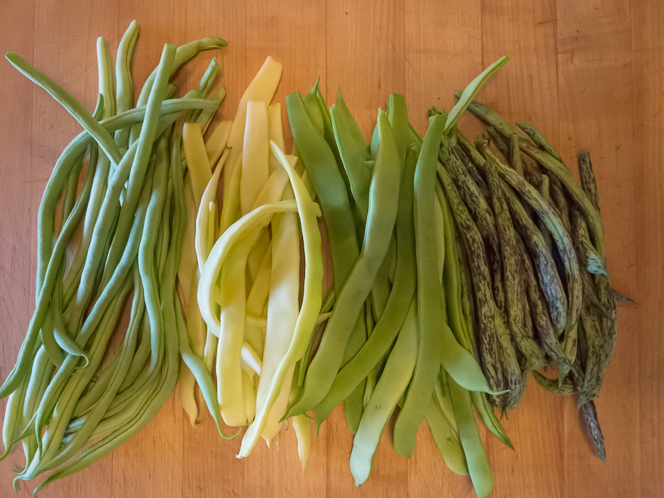 Stunning Pole Green Bean Varieties 960 x 720 · 580 kB · jpeg