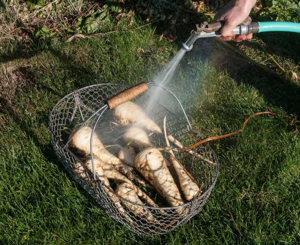 Parsnip washing