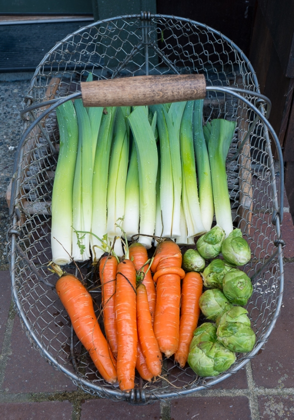 Leeks, carrots, sprouts in basket