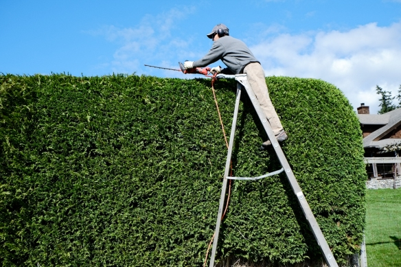 Hedge Scott ladder