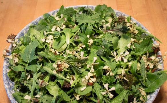 Arugula blossom salad