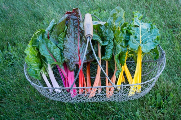 Chard in basket
