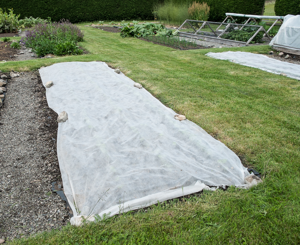 Row Covers Lopez Island Kitchen Gardens