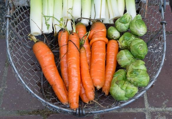 Carrots basket close-up