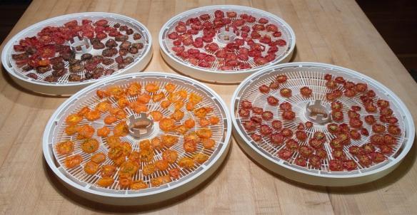 Tomatoes dried on racks