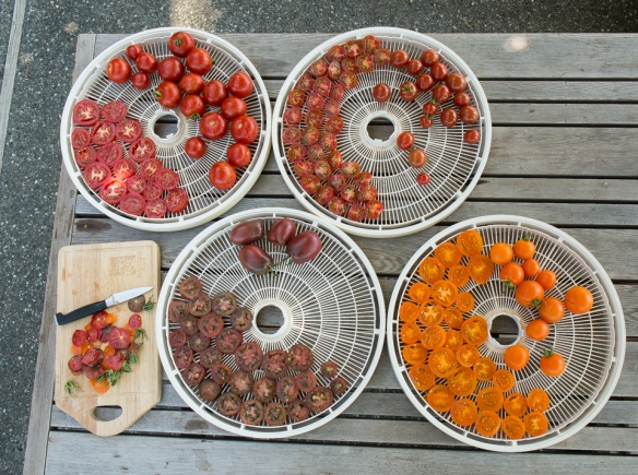 Tomatoes sliced on racks