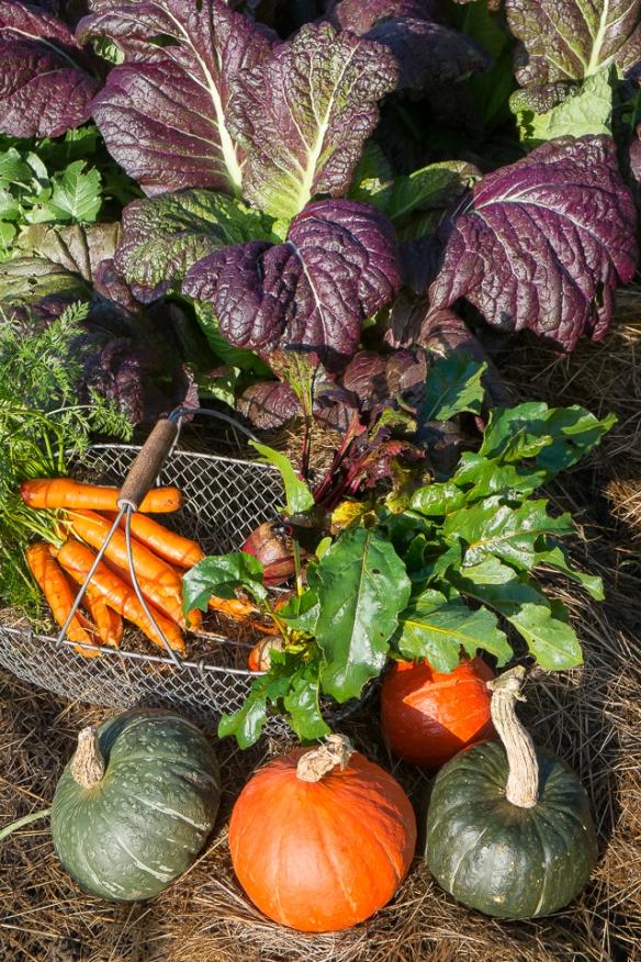 Still life carrots, beets 11:13