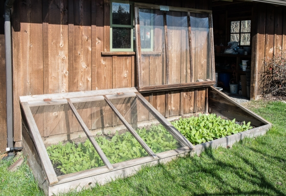 Cold frame open:closed