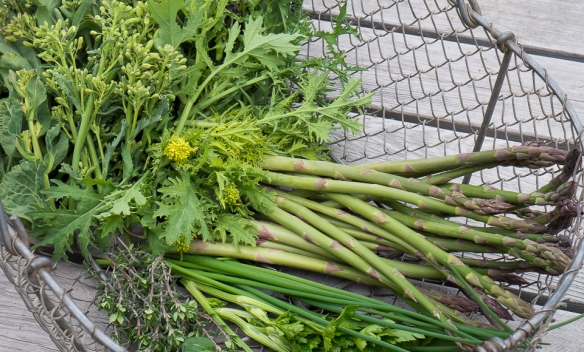 Asparagus, kale top, herbs in basket