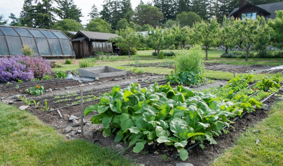 Spring vegetable beds