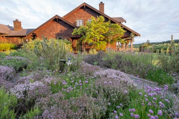 Herb garden view  2014