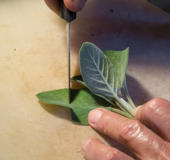 Sage cutting leaves