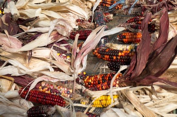 HBG corn cobs