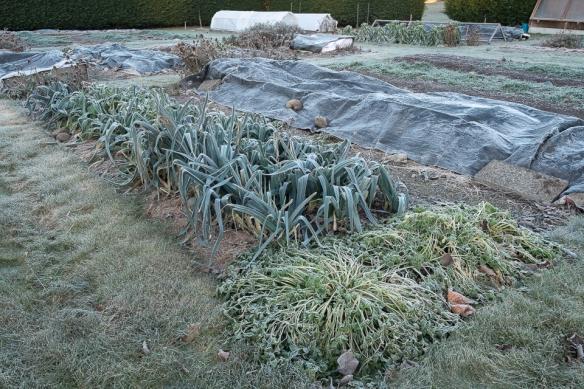 Cold garden 2014