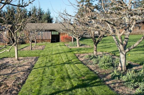 Garden grass allee
