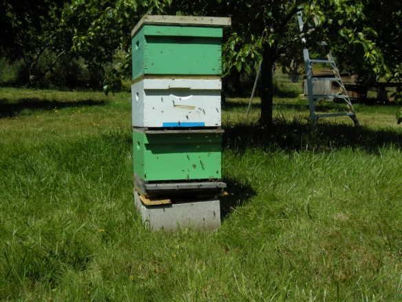 Bees K & M #1