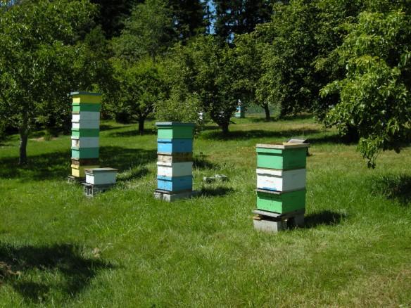 Bees K & M # 2
