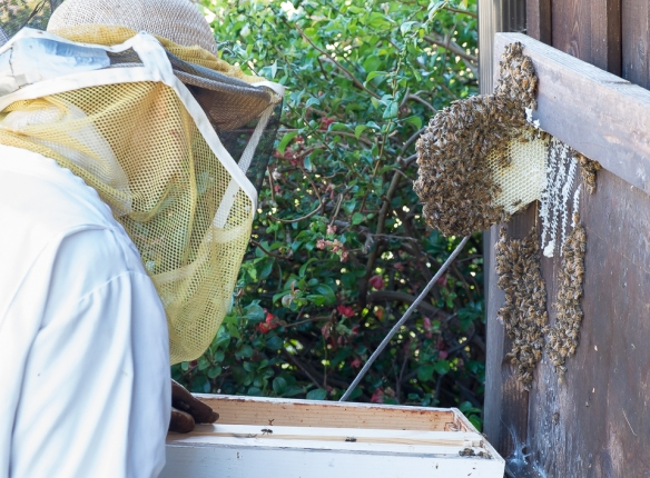 Bees K&M closeup