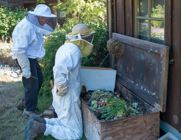 Bees K&M studying hive