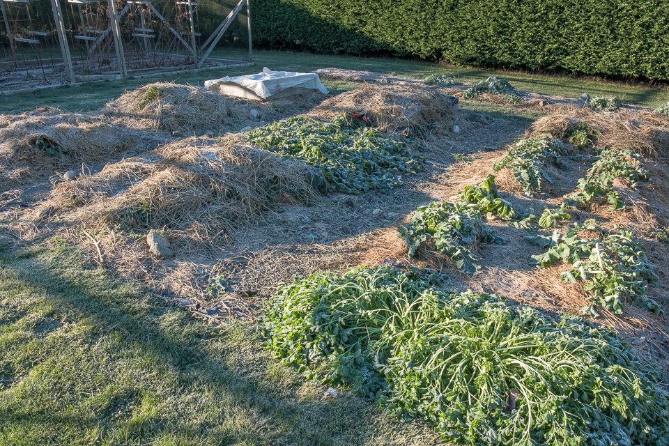 cold-mulched-beds-16