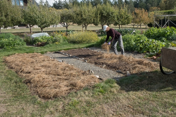 Cover Crop mulching
