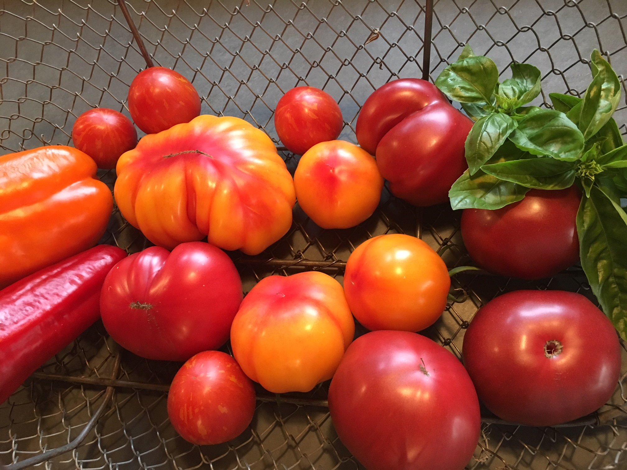 Tomatoes in basket 8:18