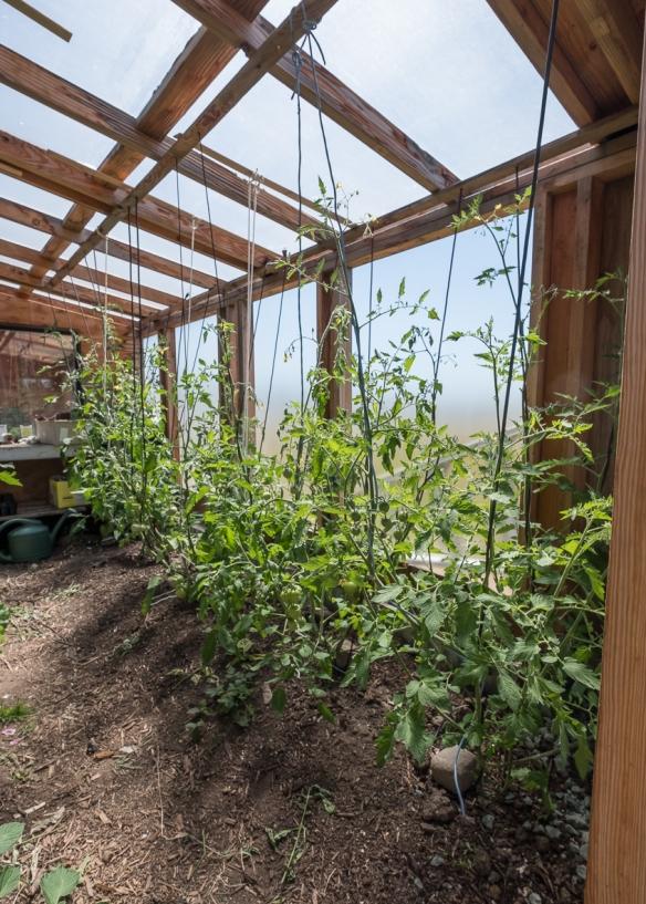 Dale tomato house