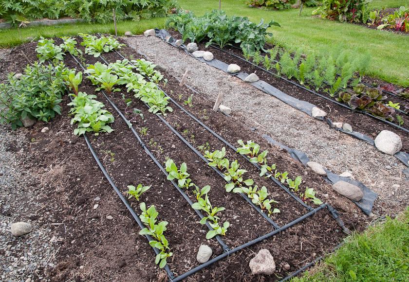 Garden bed May