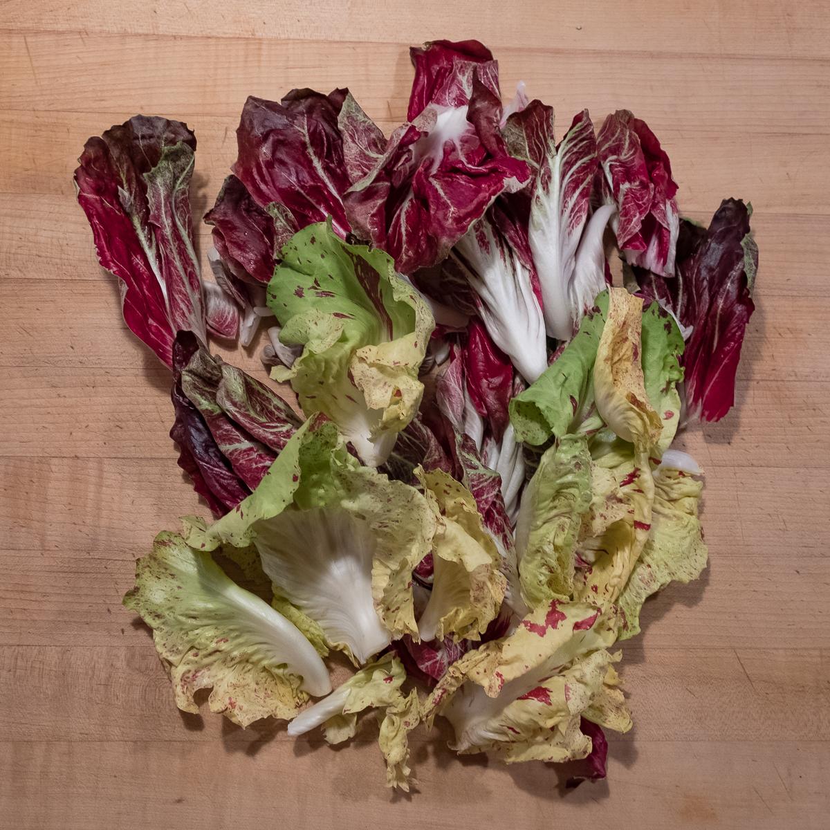 Chicories:Radicchios 1.2020